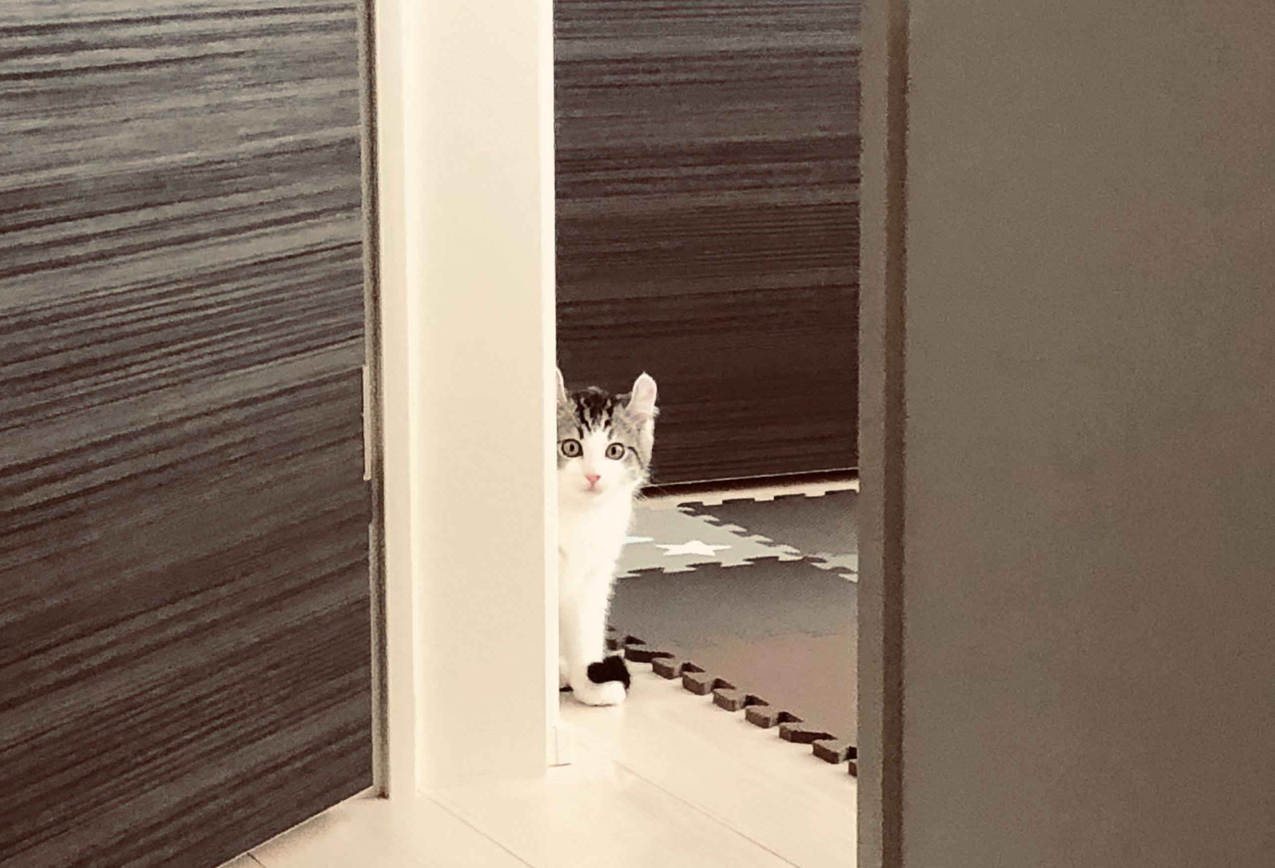 Why do kittens stare at their owners from the shadows?