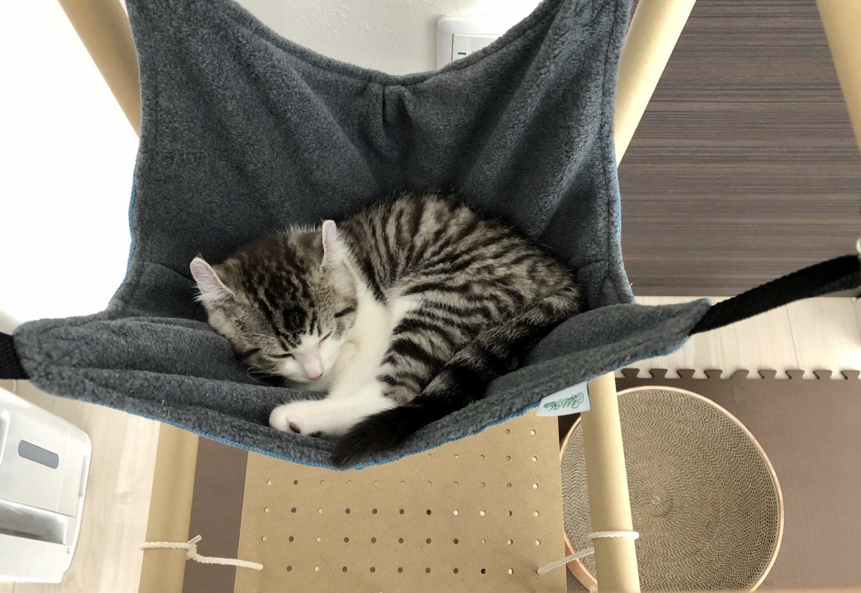 子猫用にキャットタワーを手作りしました