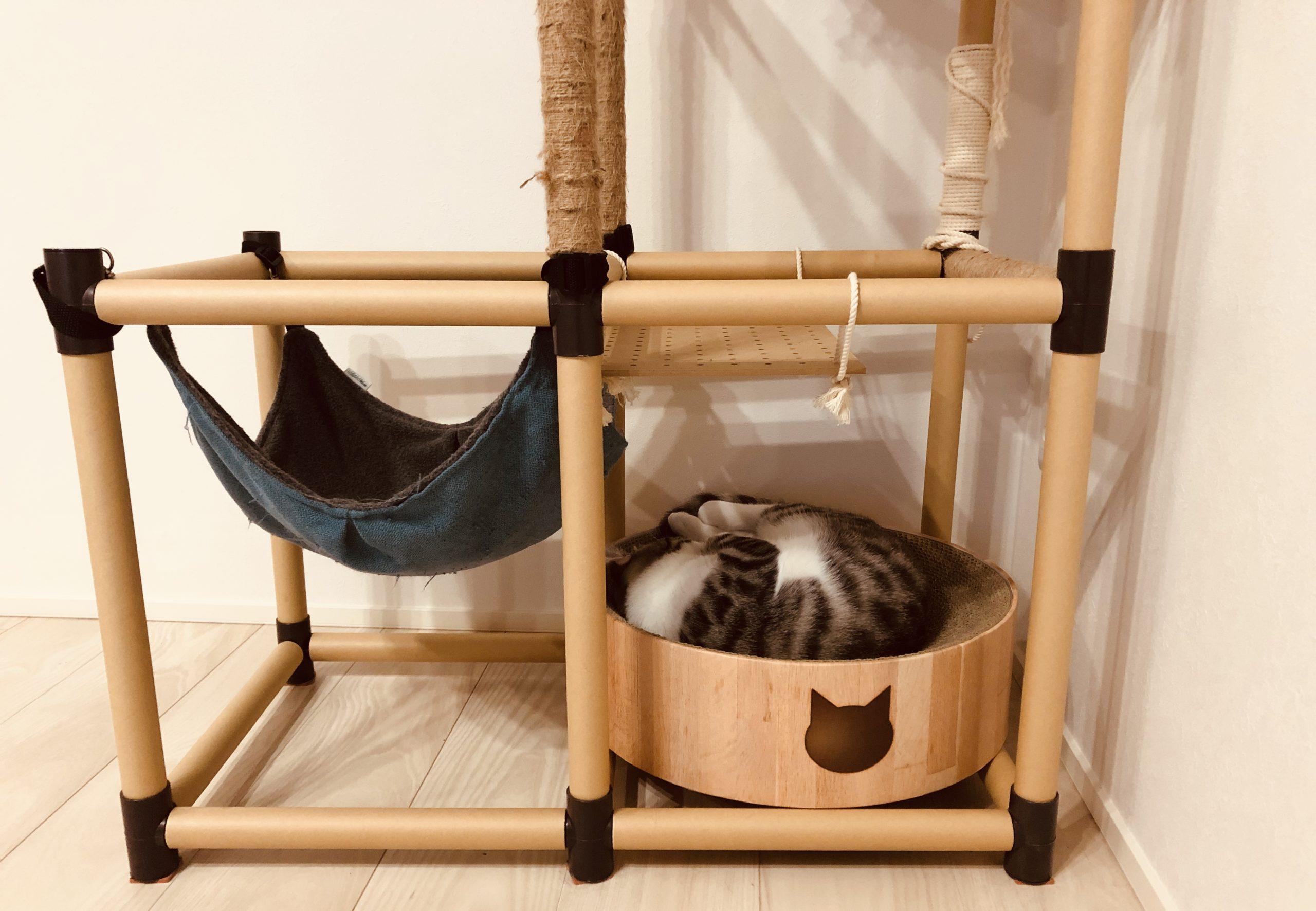 夜ご飯食べたらちょっと寝る子猫