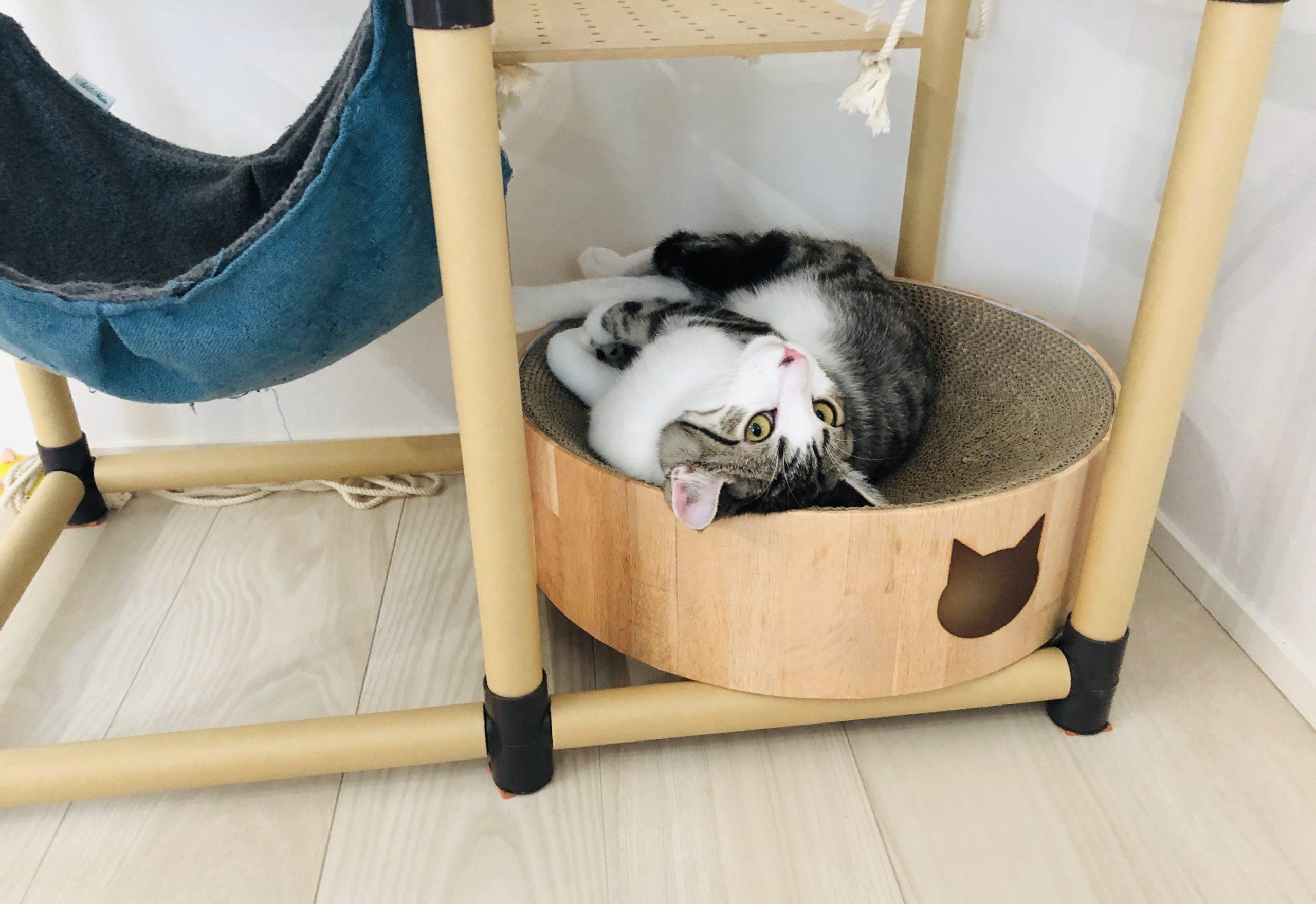 猫壱って猫ちゃんにとっては最高にゃのです