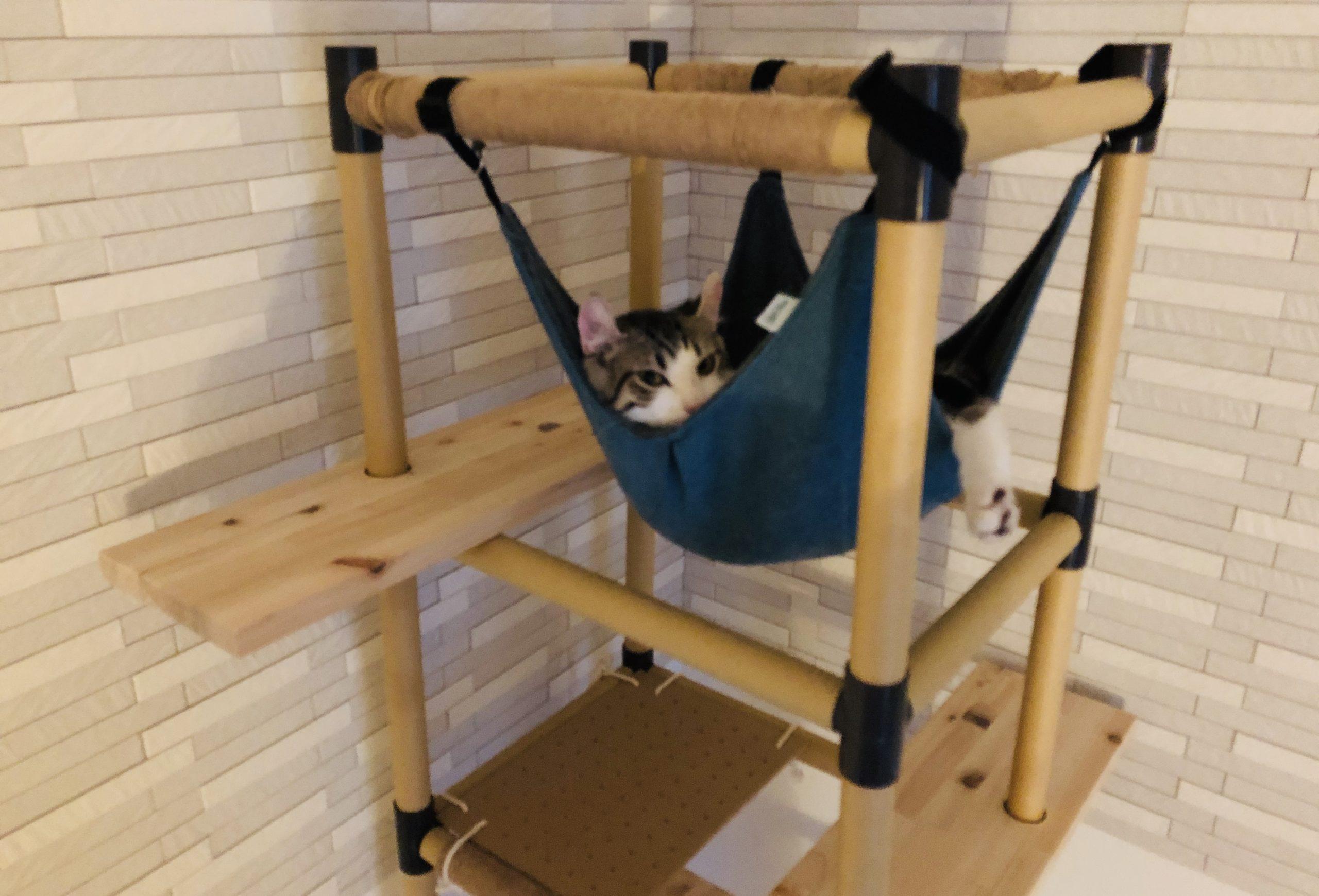 キャットタワーを喜んでいる子猫