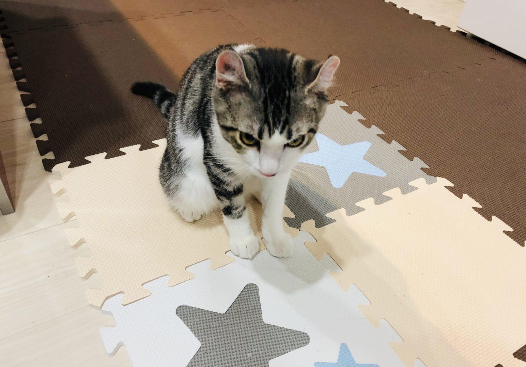 子猫の去勢手術の相談に行きました〜。