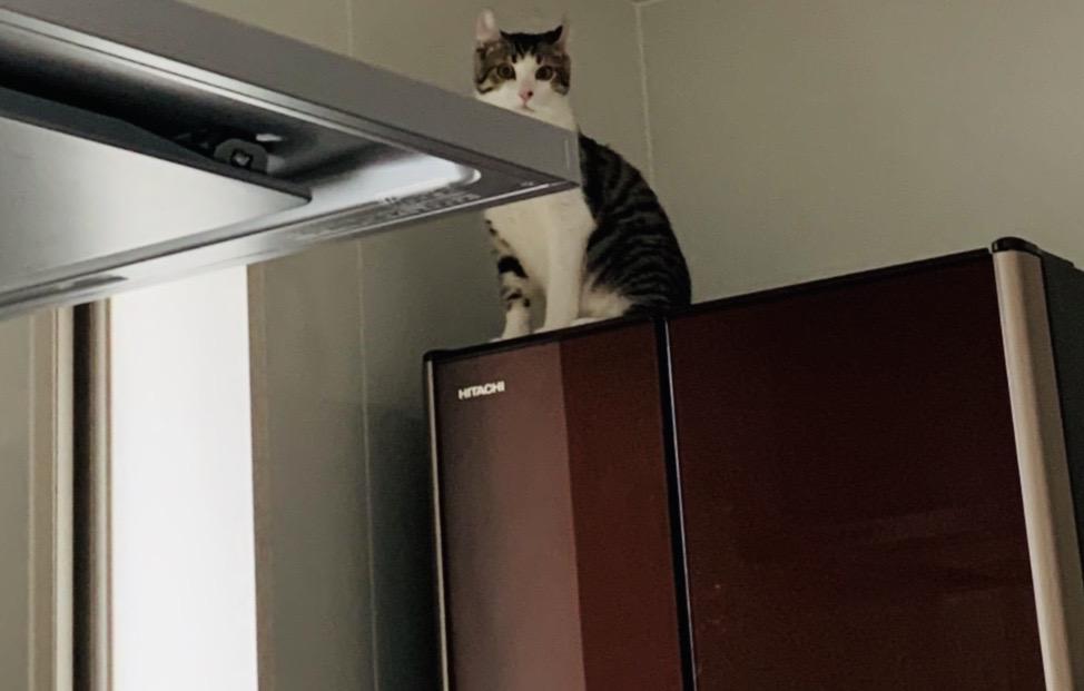 登りたい欲求を我慢できない子猫!