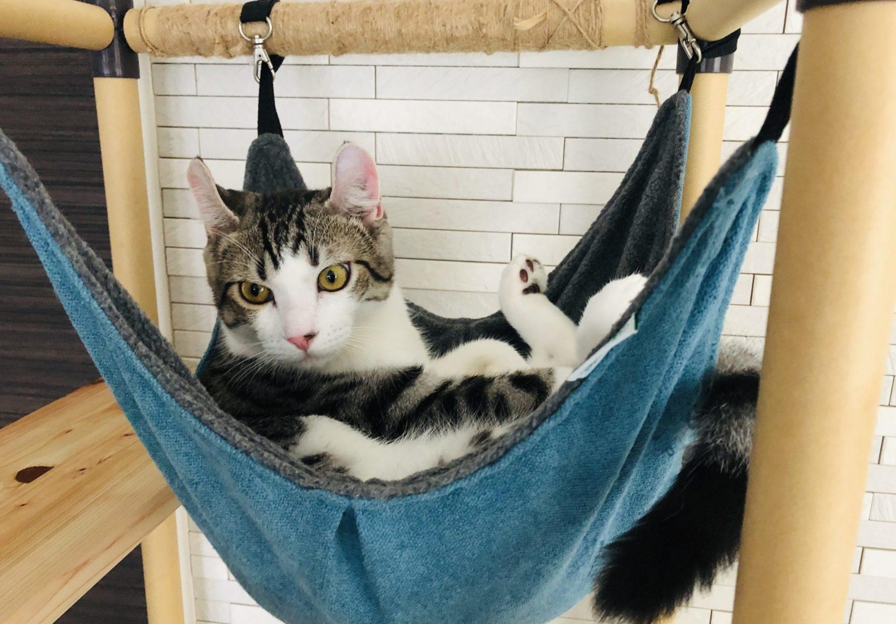 子猫は生後何ヶ月から飼うといいの?