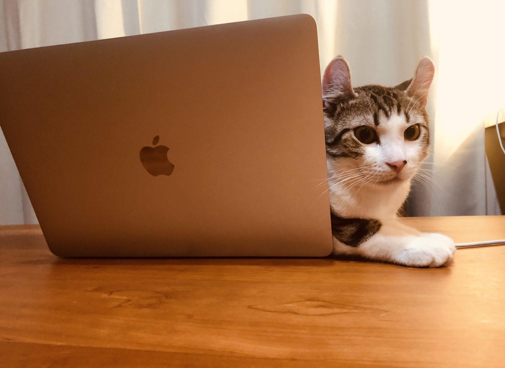猫って夏でもパソコンが好き