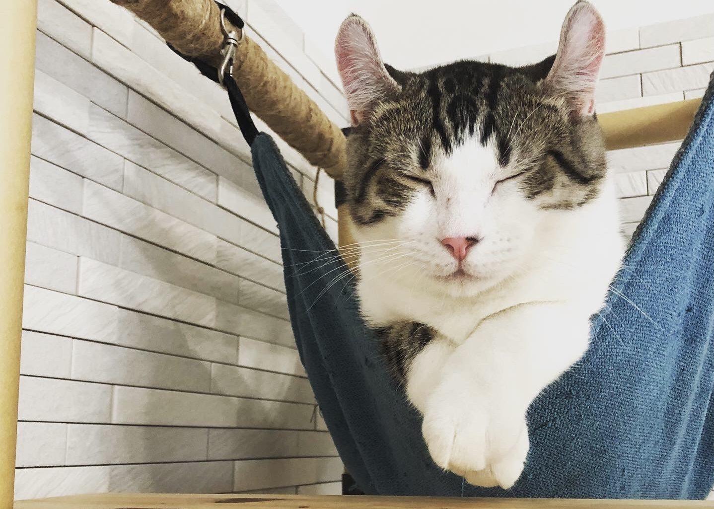 早起きしたいなら猫との生活がおすすめ