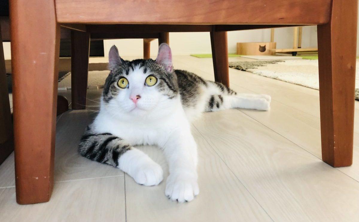 猫には床暖房!!猫と住むために引越しを考えているなら、床暖房一択です。