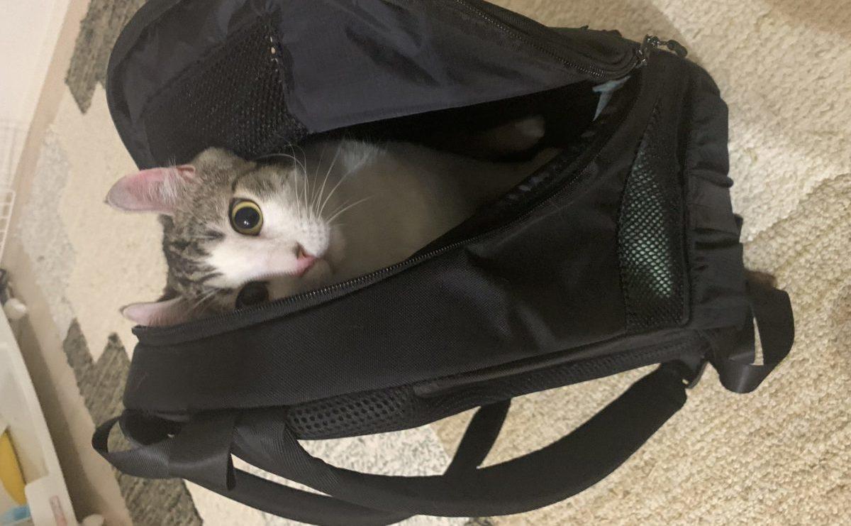 猫キャリーに見えない便利な猫壱リュックのレビュー