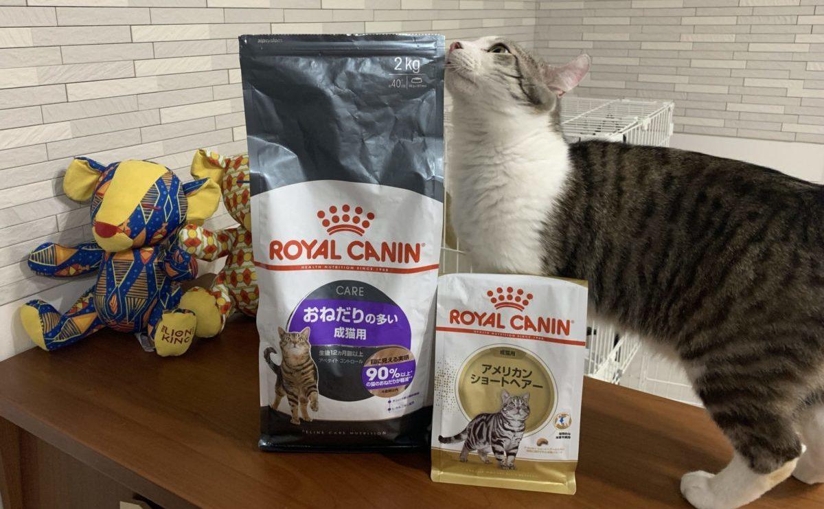食欲旺盛な猫 しんばさんのごはん(ロイヤルカナン)
