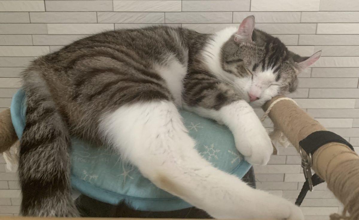 猫用ひんやりマットは必要?