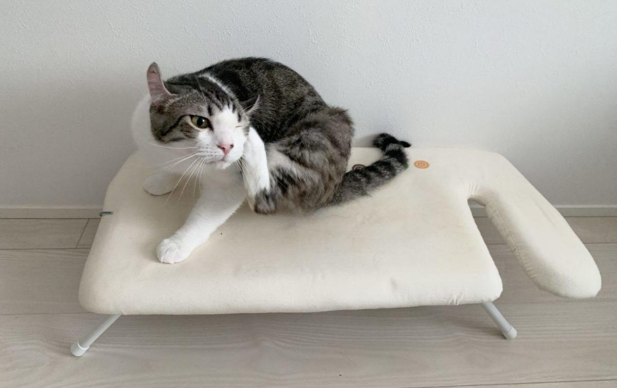 アイロンがけを邪魔する猫がかわいい〜アイロン台がお気に入りのしんばさん〜