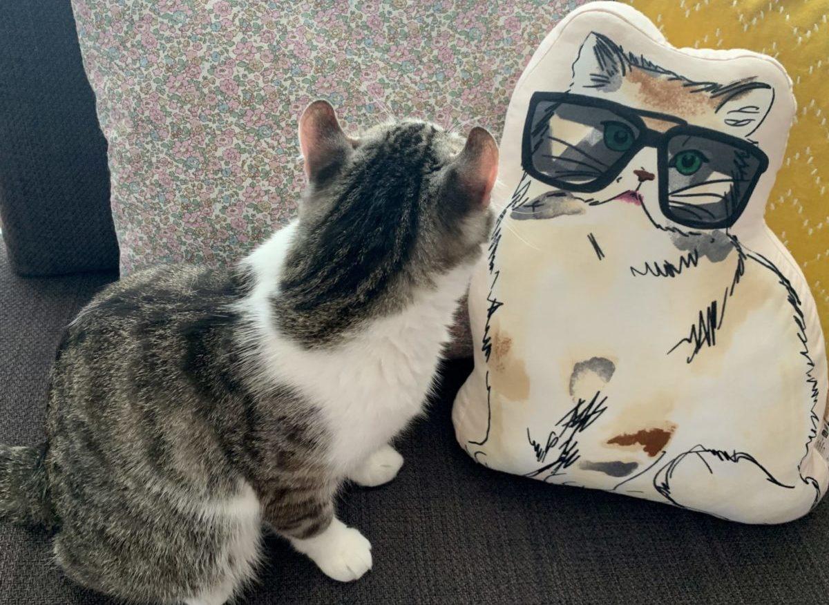 UNIQLO and PAUL &JOE collaboration Pretty cat shaped cushions♪